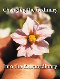 Changing the ordinary into the extraordinary