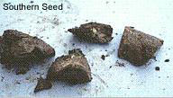 Southern Seed